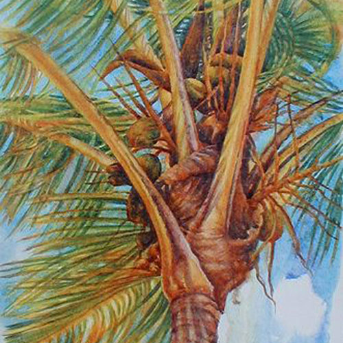 coconut-breeze-watcolor-th